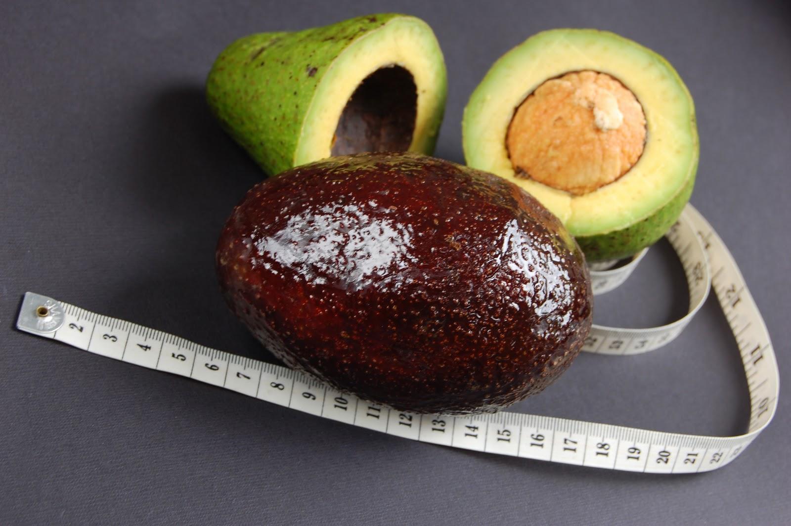 Avocado And Fat 91