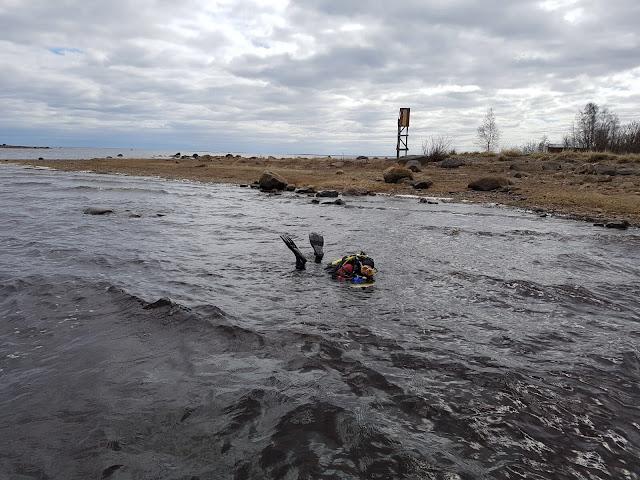 Sukeltaja matalassa rantavedessä, yläruumis ja räpylät pinnalla.