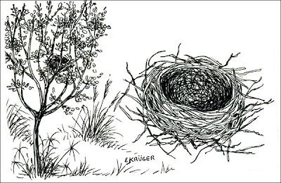 nido de Pepitero de collar Saltator aurantirostris
