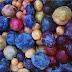 Tree of 40 Fruit, el arbol multi-cultivo que podria acabar con el hambre en el mundo