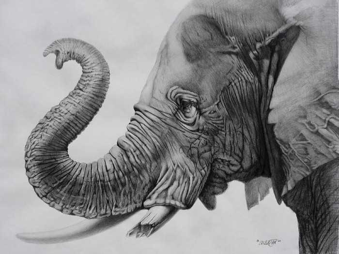 Рисунки карандашом. Tim Dangaran