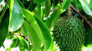 ramuan-tradisional-menghilangkan-benjolan-di-payudara