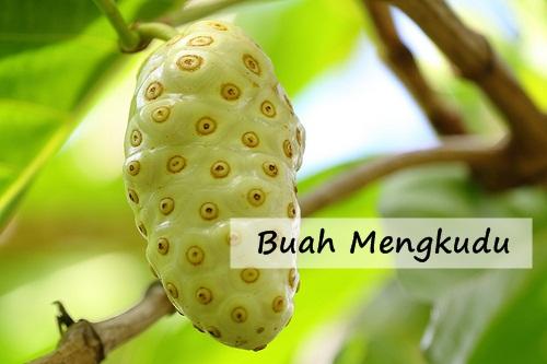 https://pengobatatradisionaltbc.blogspot.com/2017/10/manfaat-buah-mengkudu-untuk-tbc.html