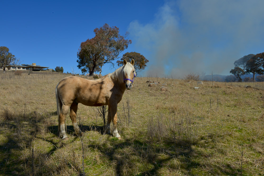 Act Rural Fire Service Events Canberra Equestrian Centre