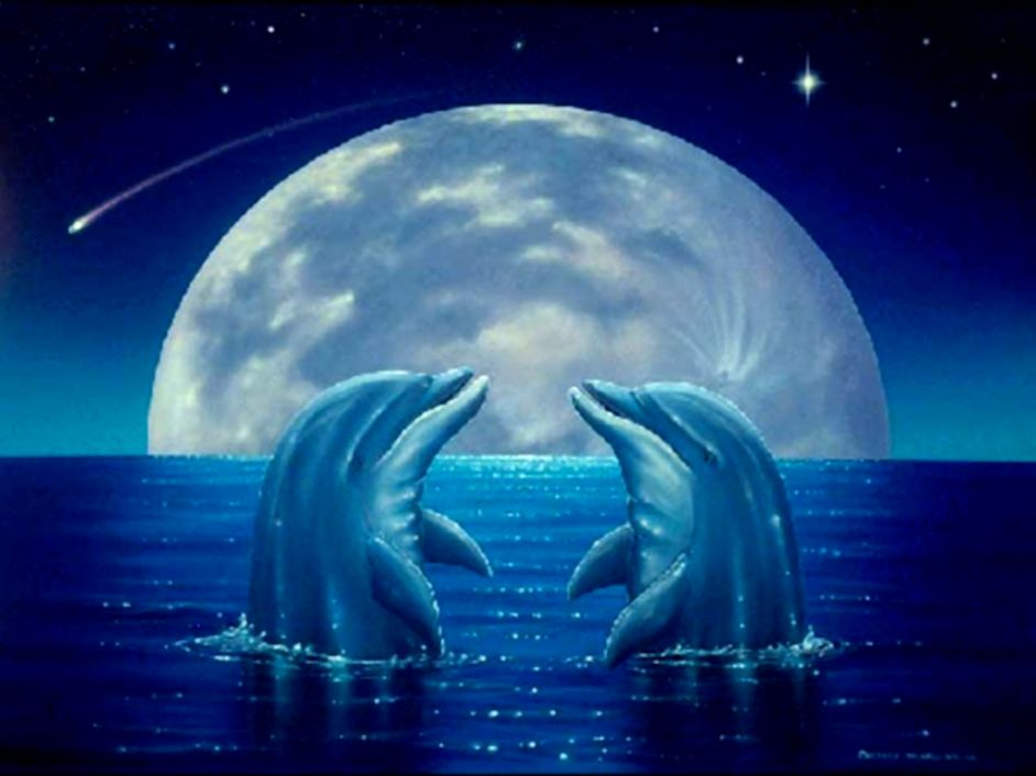 Cute Dolphin Wallpaper 8462 Hd Wallpapers In Cute