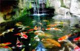 tukang taman surabaya, kolam koi, kolam minimalis, tukang taman surabaya, kolam, dekorasi, jasa taman, desain taman surabaya, TUKANG TAMAN SURABAYA SELATAN, TUKANG TAMAN SURABAYA BARATDAYA, TUKANG TAMAN SURABAYA BARAT, TUKANG TAMAN SURABAYA BARAT LAUT, TUKANG TAMAN SURABAYA UTARA, TUKANG TAMAN SURABAYA TIMUR, TUKANG TAMAN SURABAYA SELATAN, TUKANG TAMAN SURABAYA KOTA, TUKANG DESAIN TAMAN SURABAYA, DESAIN TAMAN SURABAYA SELATAN, DESAIN TAMAN SURABAYA BARATDAYA, DESAIN TAMAN SURABAYA BARAT, DESAIN TAMAN SURABAYA BARAT LAUT, DESAIN TAMAN SURABAYA UTARA, DESAIN TAMAN SURABAYA TIMUR, DESAIN TAMAN SURABAYA SELATAN, DESAIN TAMAN SURABAYA KOTA,  DESAIN TAMAN SURABAYA,