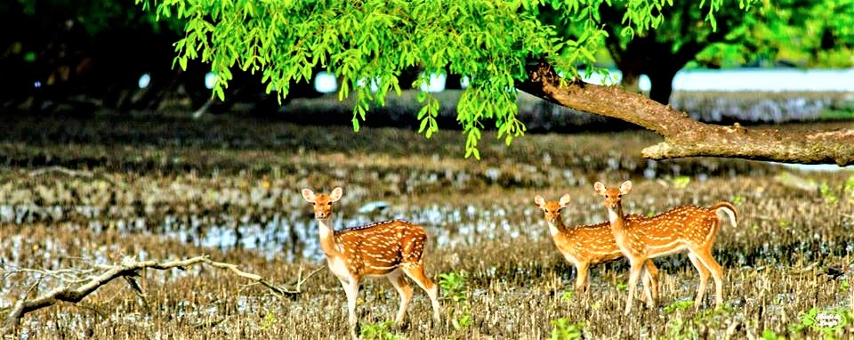 Sundarban Animals