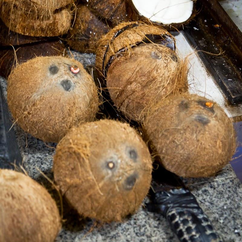 la vie de mon aquarium une noix de coco pour aquarium