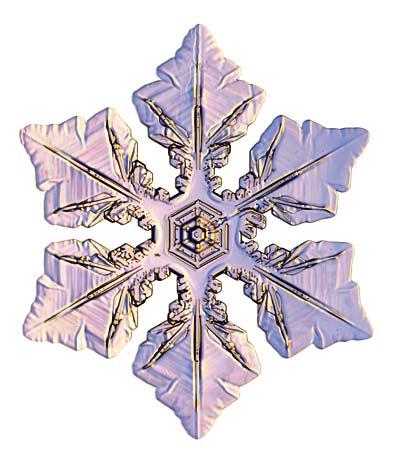 Winner Ford Dover De >> Ms.Reynolds Classroom Canvas: Snowflake Symmetry