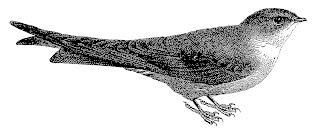 bird image transfer transfer digital illustration vintage clipart