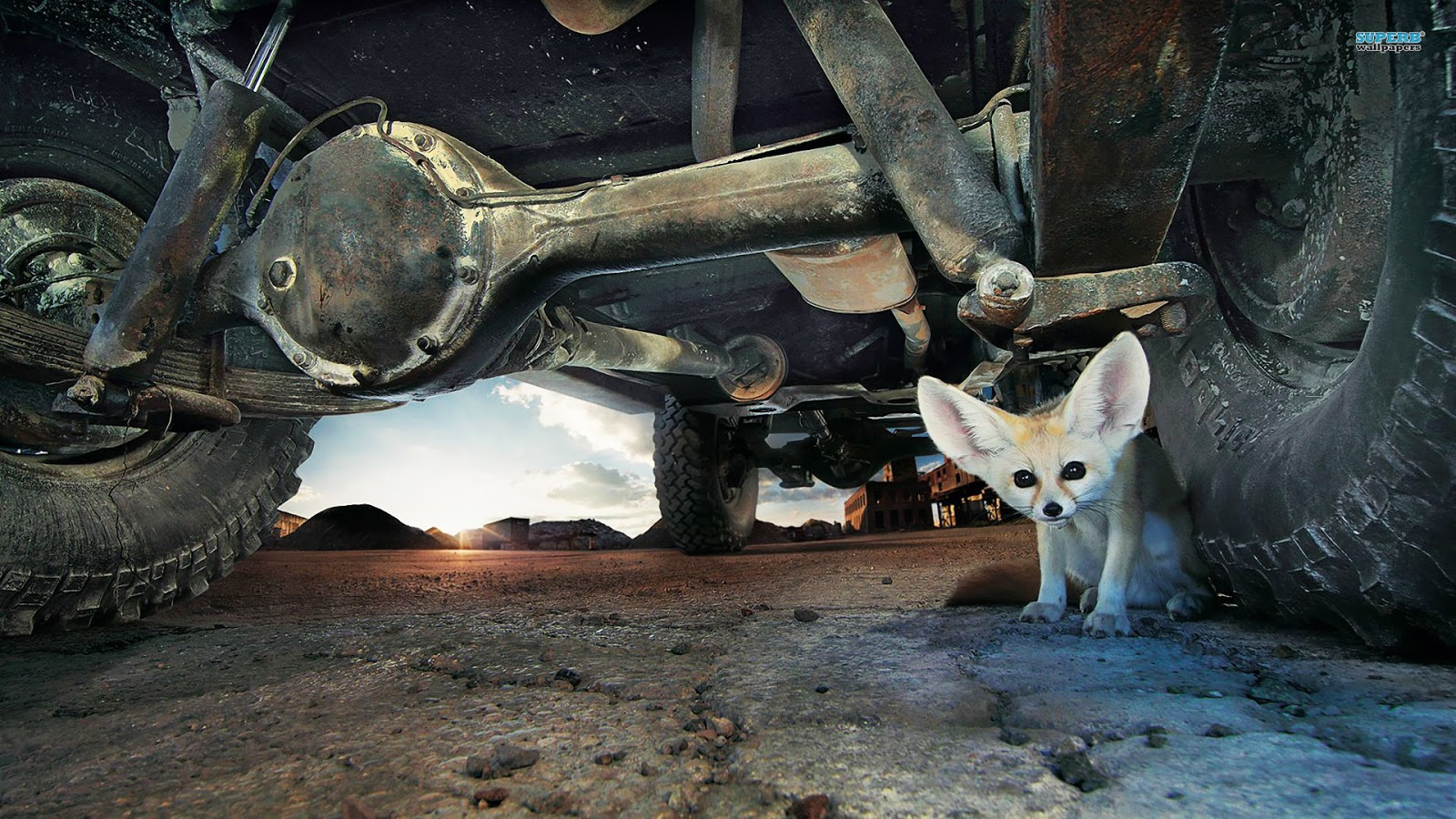 Hd Fennec Fox Wallpapers Fun Animals Wiki Videos Pictures Stories