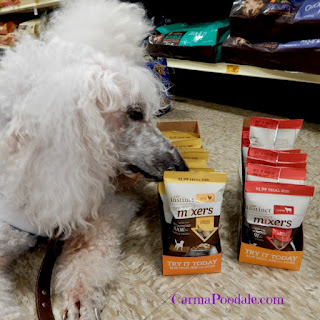 Carma Poodale sniffing the Instinct rawboost mixers