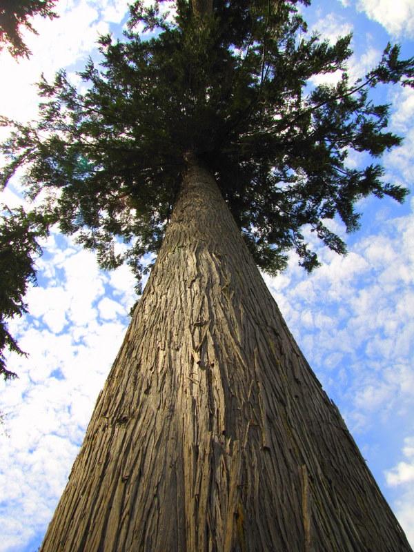 EcoPreacher: Cedars Trees and Mustard Seeds ...