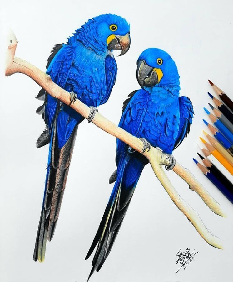 04-Bele-Birds-Drawings-www-designstack-co