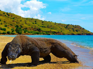Pink beach in Komodo island indonesia
