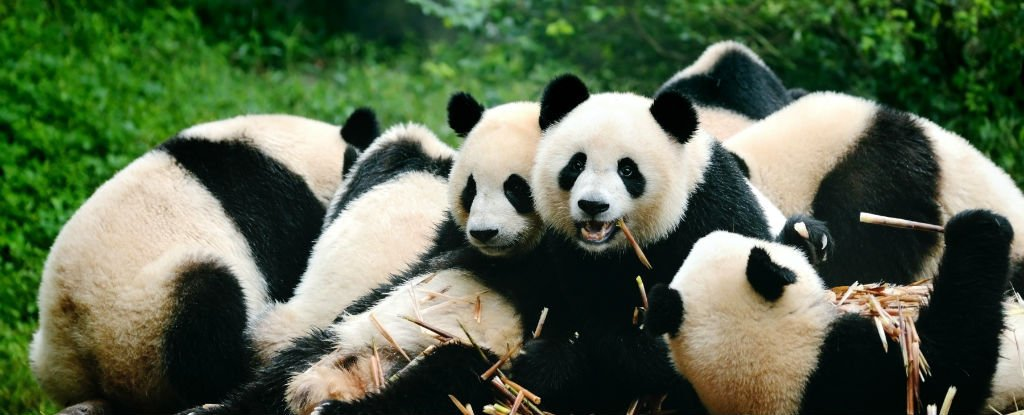 Kung fu panda 3 2016 - 3 10