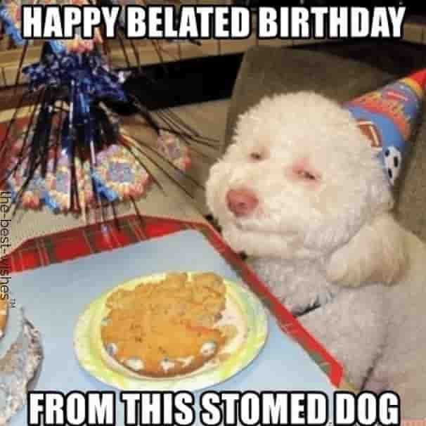 stomed dog belated birthday memes