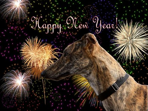 Image result for HAPPY NEW YEAR WITH GREYHOUNDS