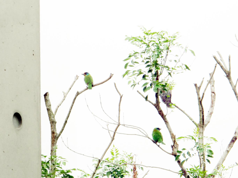 木容會館|MURONG NATURE & CARE 竹北 芳療 SPA : 四月 2012