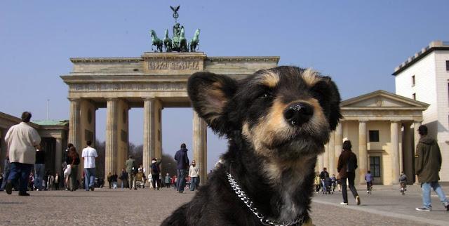 Μεγάλο καβλί σκυλάκι στυλ φωτογραφίες