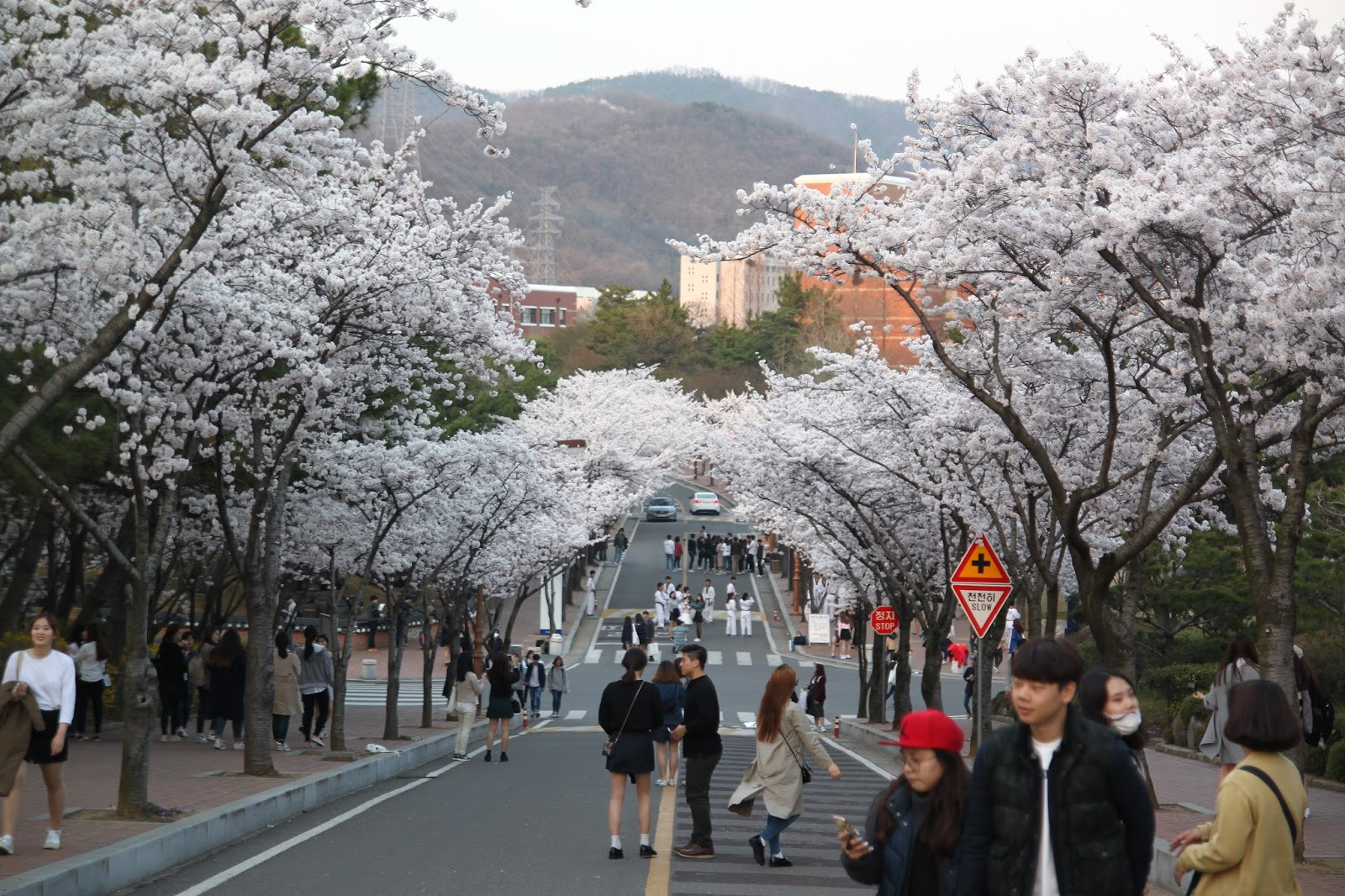 Cherry blossoms got a big phat apple bottom booty - 3 part 2