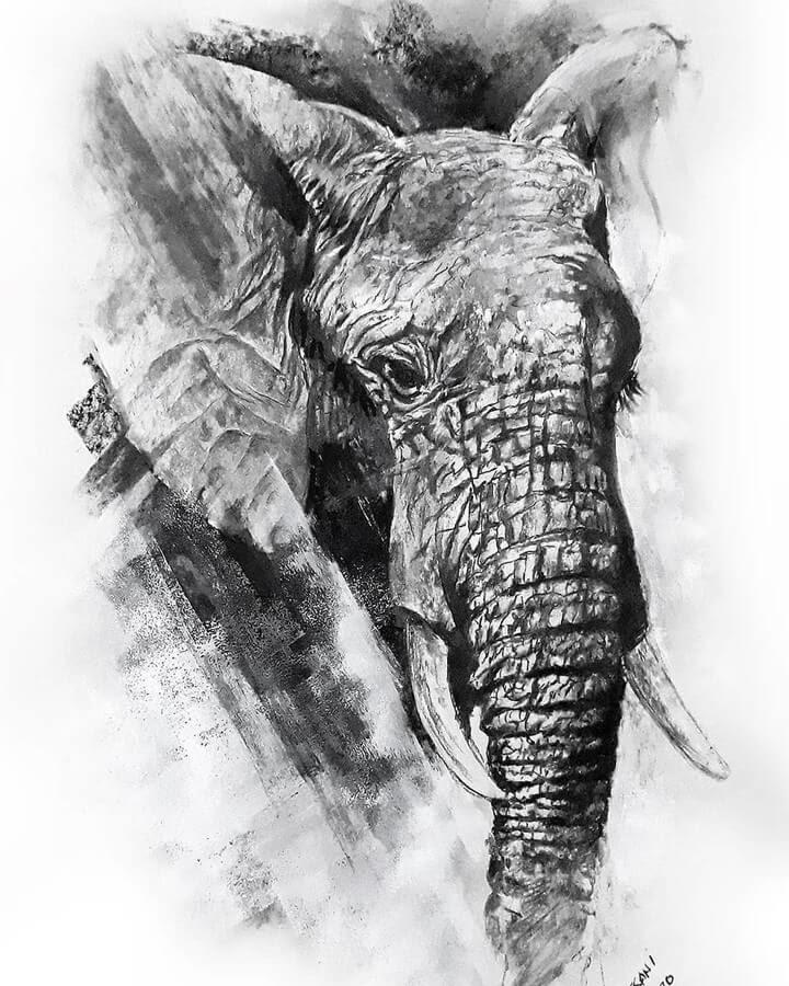 09-Elephant-Natalya-Bassani-www-designstack-co