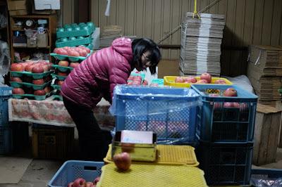 長野県下伊那郡飯島町のリンゴ園 那須野農園