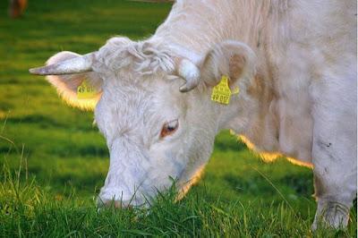 Usar antibióticos em animais ameaça a saúde humana, saiba por que