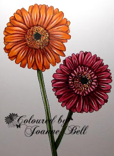 Gerberas colouring by Joanne - Colours and Cards