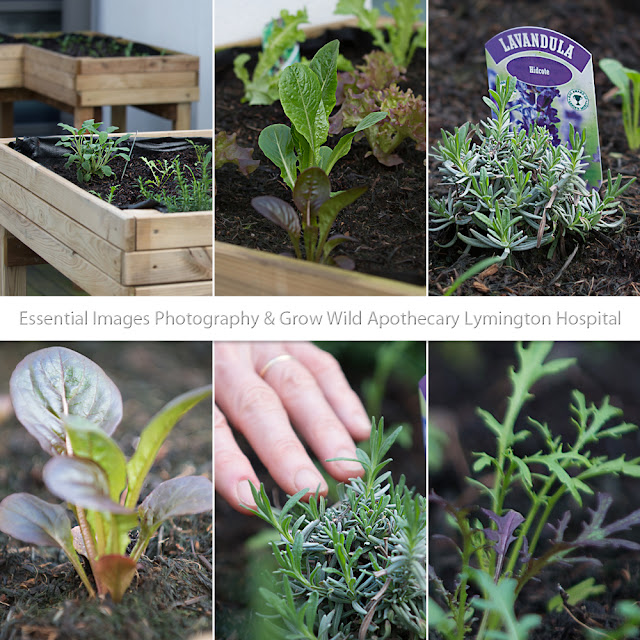 Lymington hospital Grow Wild Project Apothecary