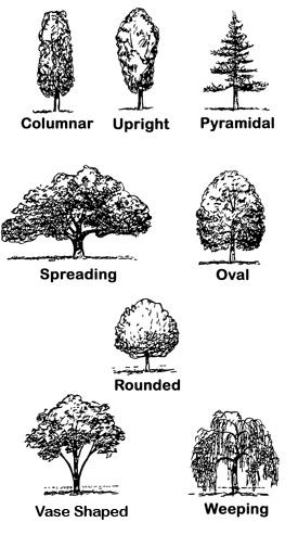 Crabapple LandscapExperts: A Tree, a Bush or a Shrub