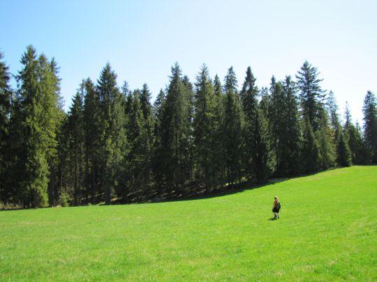 Po drugiej stronie polany znajduje się ciąg dalszy szlaku