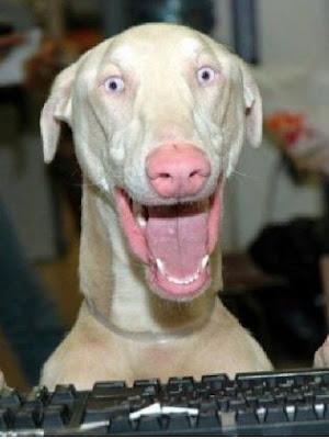 geek de chien