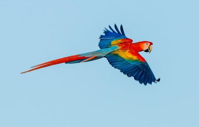 Never Kiss A Parrot