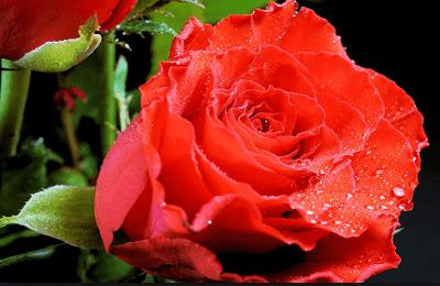 Kumpulan Puisi Indah Tentangmu Kasih | Puisi Cinta Romantis Banget
