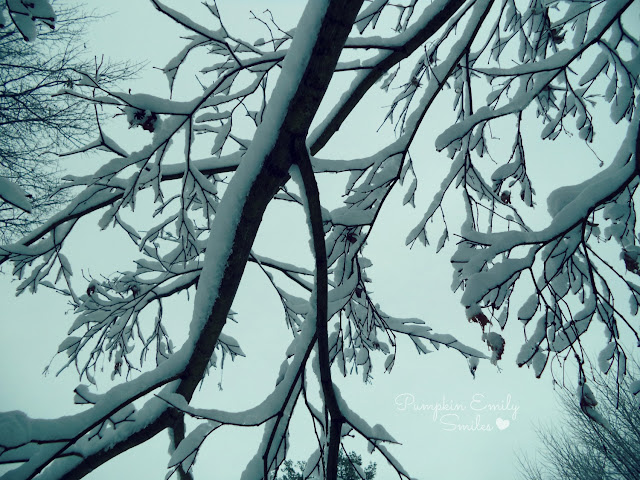 Snow on a Japanese Maple tree