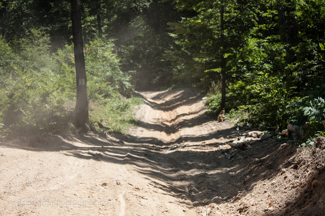 Poros erdészeti út a Zarándi-hegységben