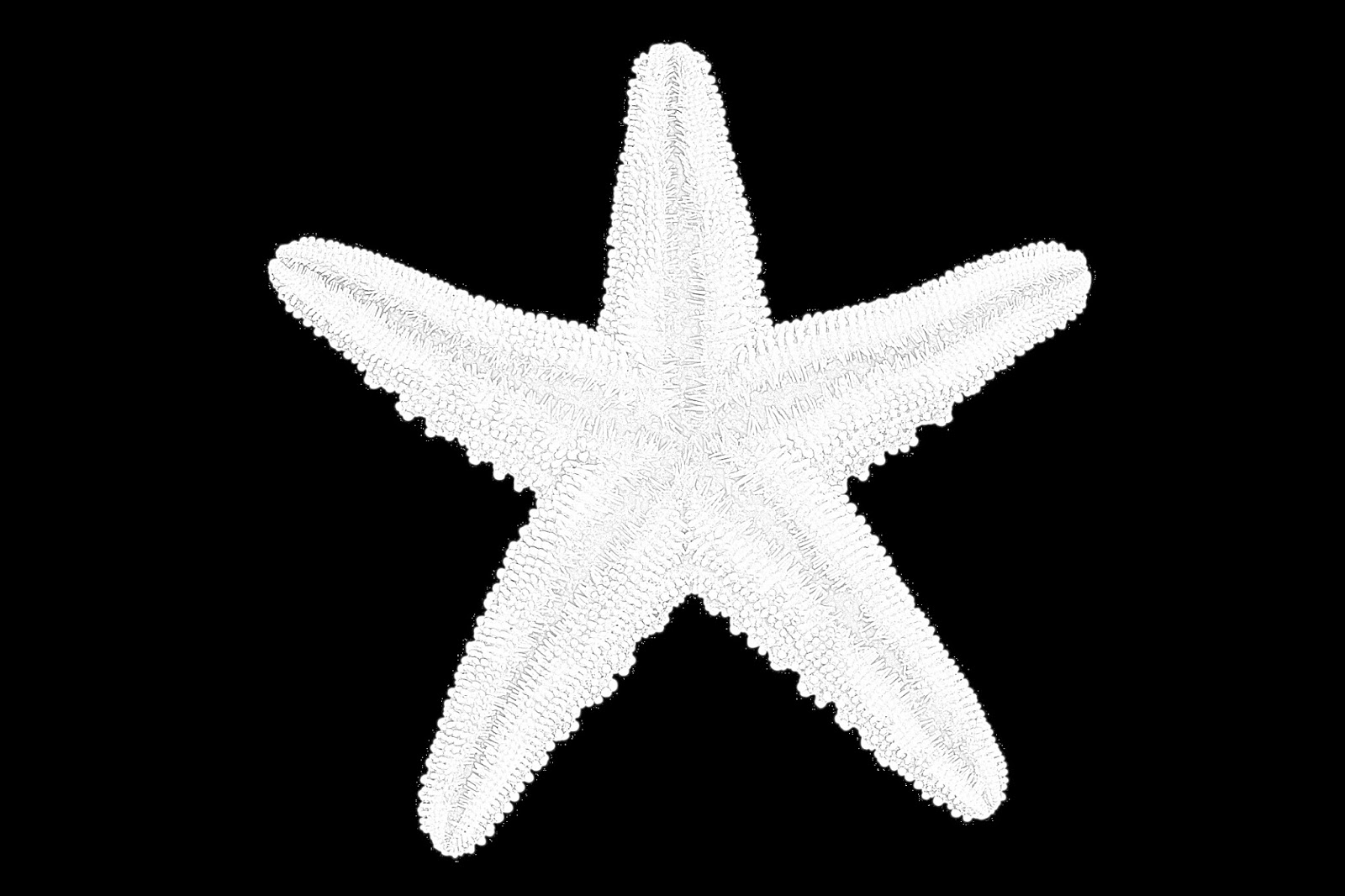 Coloring Pages Starfish Sea Stars Coloring Pages