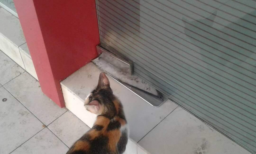 anak kucing terperangkap
