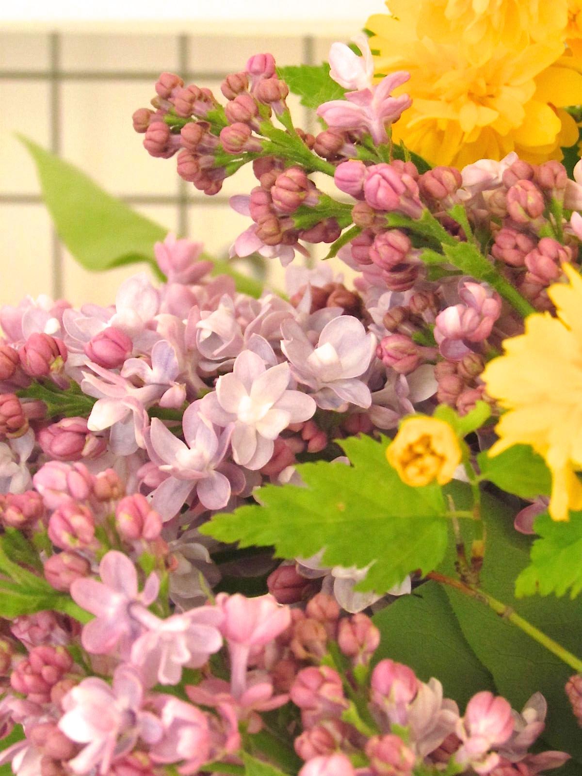 Casa andersen - Serenelle fiori ...