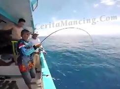 Double Strike Mancing Ikan Amberjack Besar Mantap