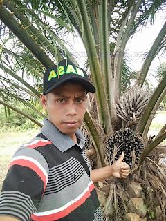 pengadaan pupuk organik nasa dalam meningkatkan produksi kelapa sawit