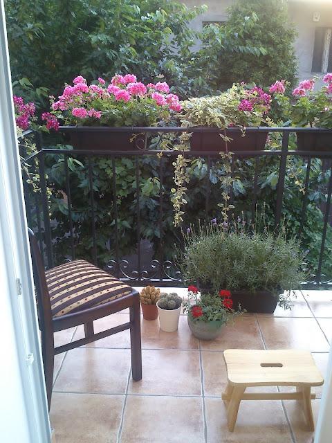 pelargonie, komarzyca, lawenda, kwiaty, balkon