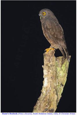 Christian Artuso: Birds, Wildlife - photo#19