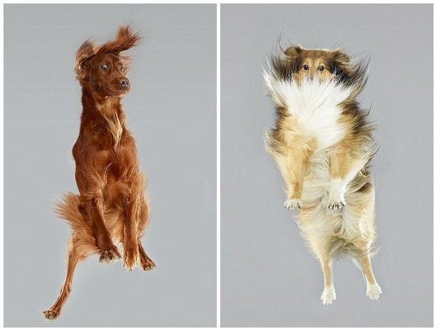 Dog freefall instant capture