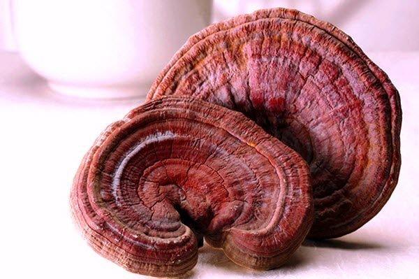 Chế biến nấm linh chi đỏ thành món ăn