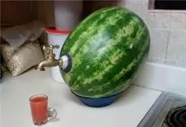 Gambiarras na melancia
