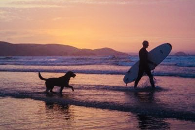 Pet Friendly Beaches and Hotels in Southwest Florida