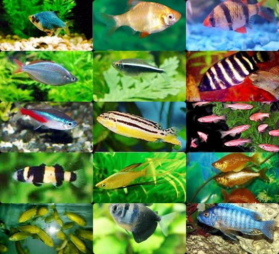Contoh Ikan Air Laut