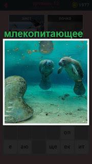 млекопитающее плавает под водой, на самом дне